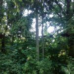 kiekeberg-kletterpark6